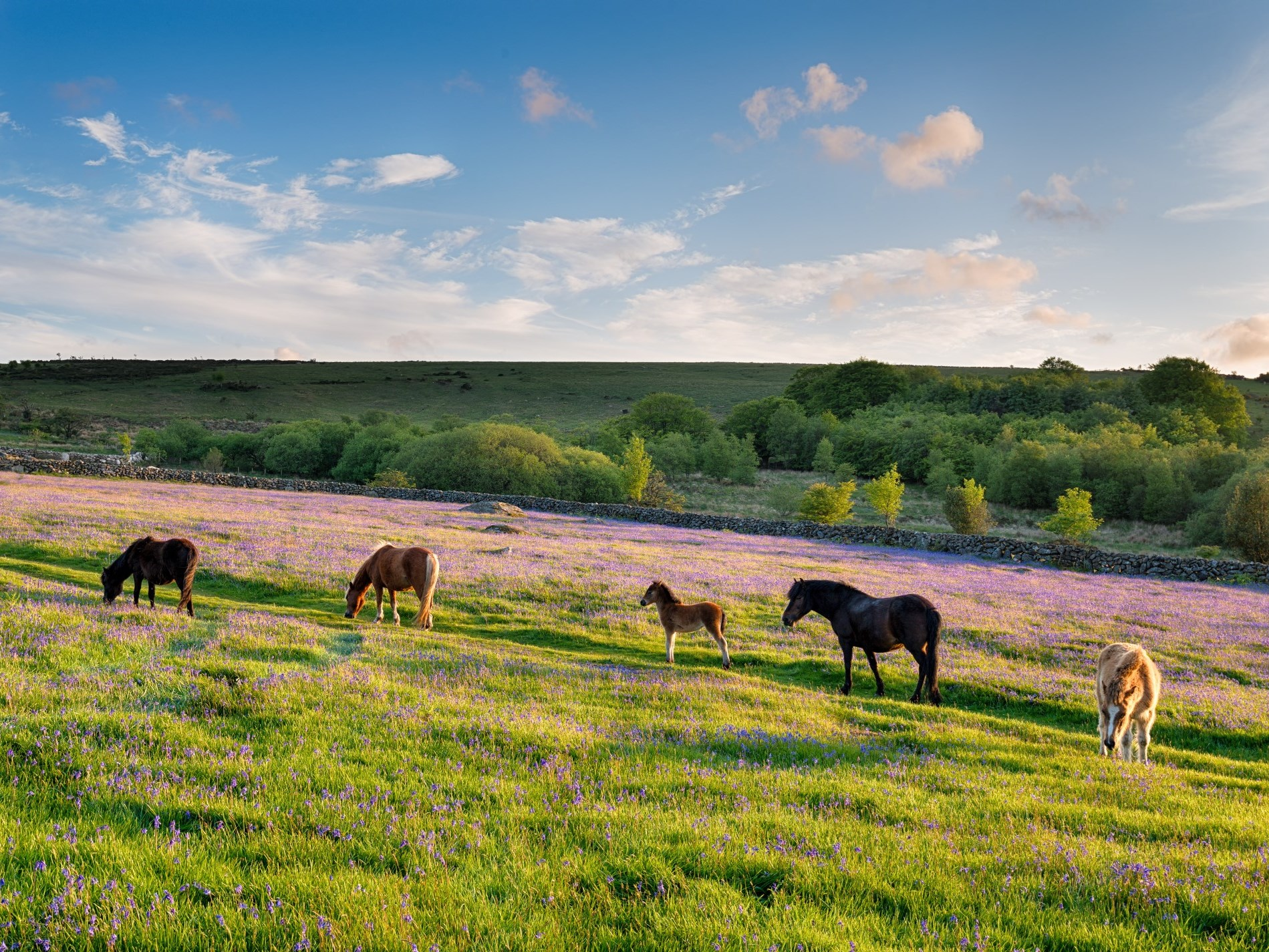 Take a trip to Dartmoor about hour away
