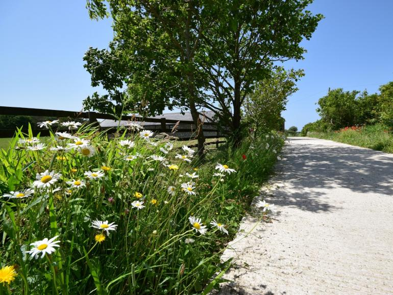 Let the wild flowers lead you....
