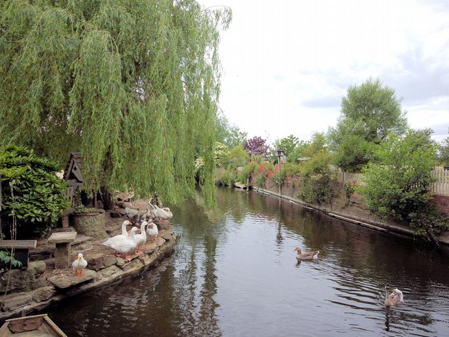 Ducks and geese by the river that runs through the mill