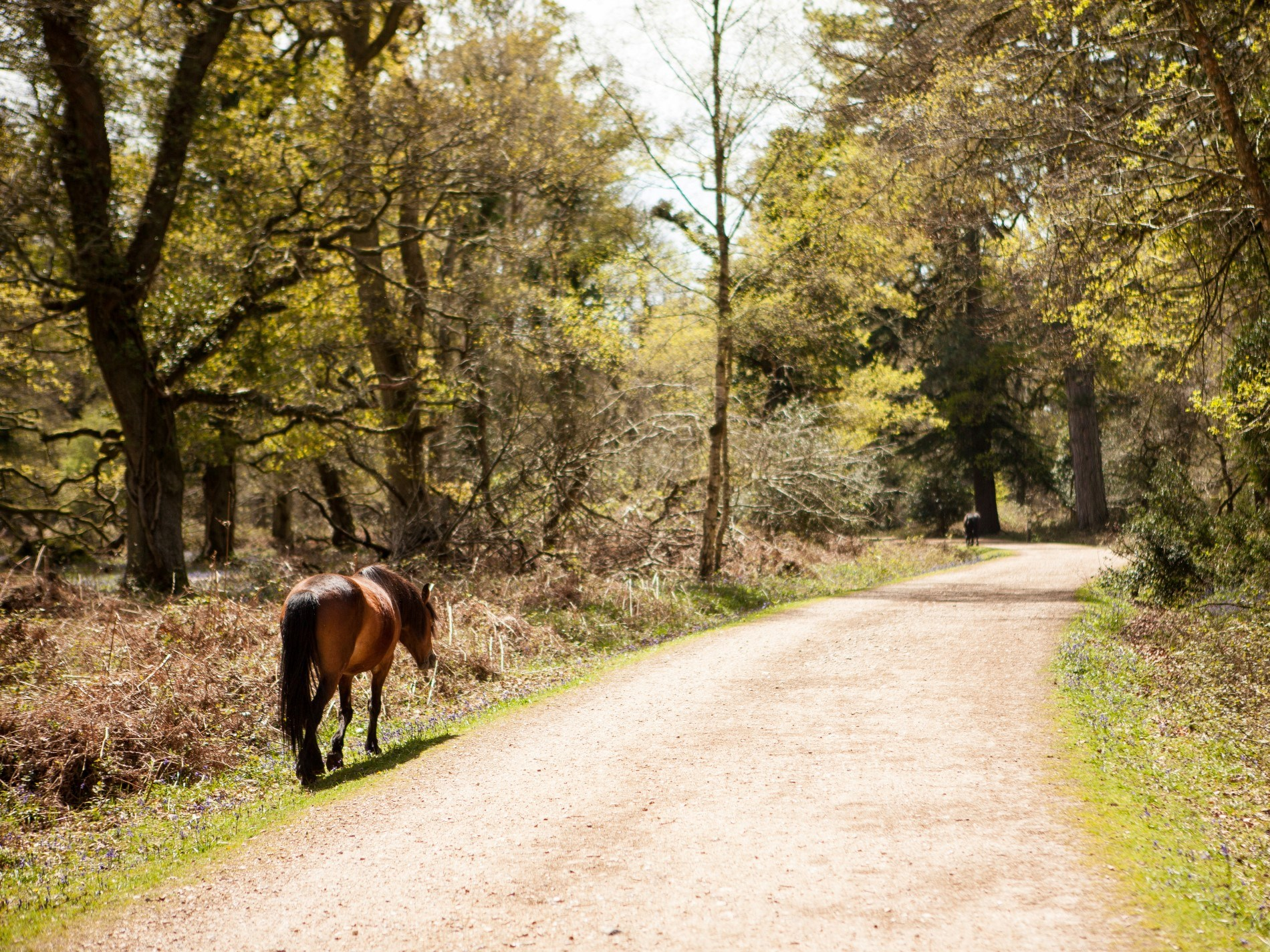 Exploring the New Forest