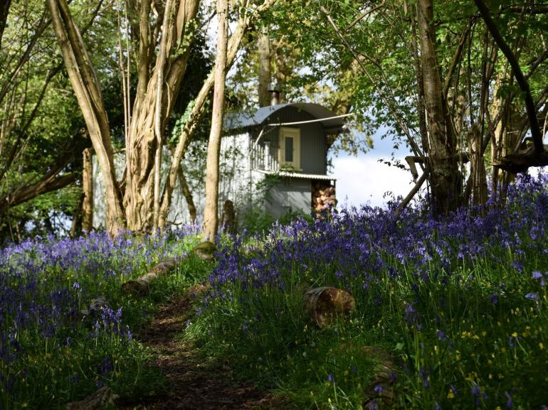Tucked away in bluebell heaven