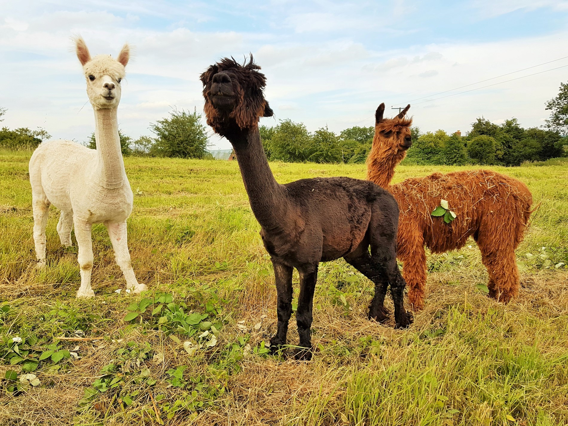 Meet the local residents with walks available by arrangement