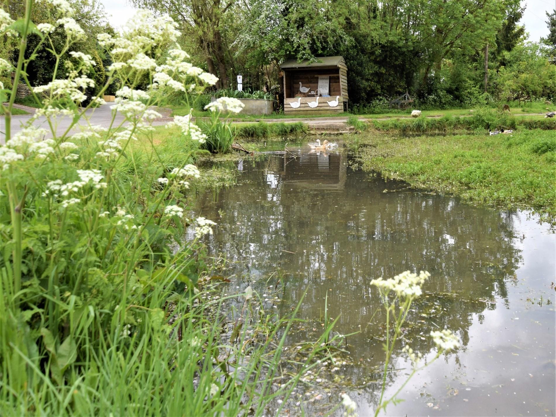 Village pond and farmshop