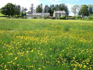 Kestrel Cottage (52509)