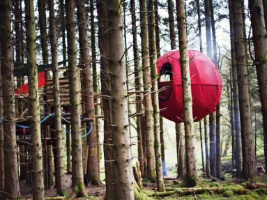 Red Kite Tree Tent - Dragon