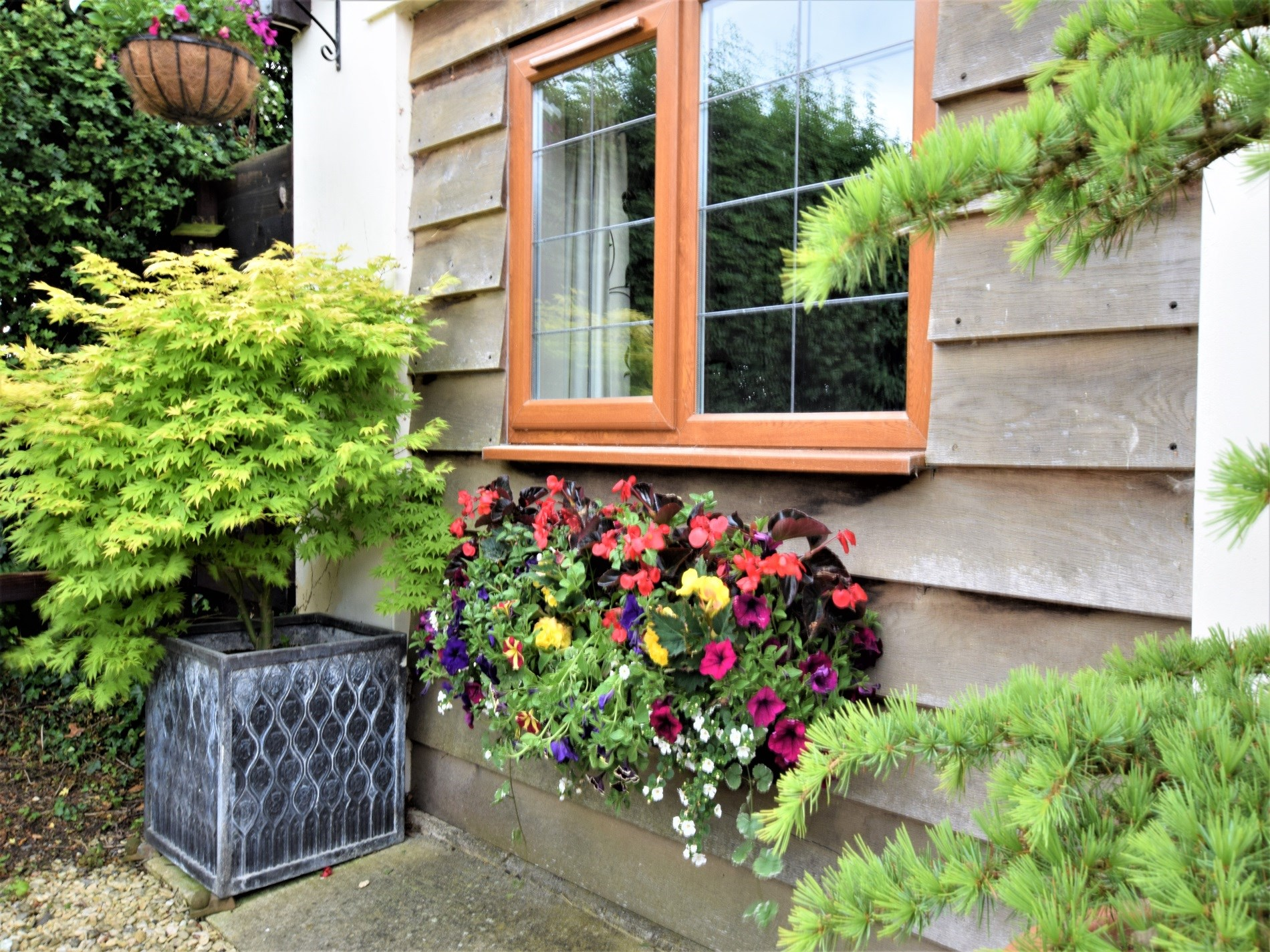 Pretty windowboxes