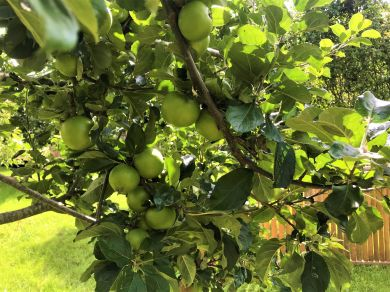 Apple Tree Lodge At Talgarth (59734)