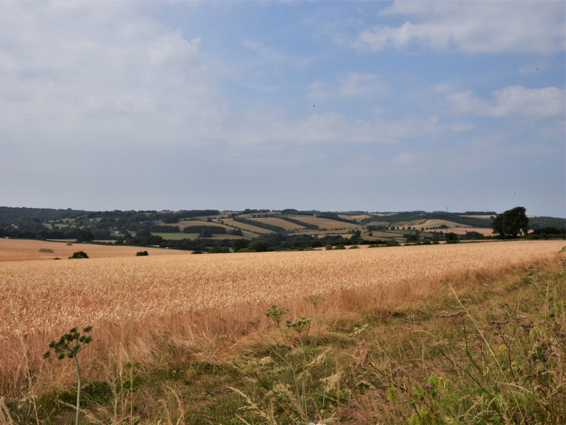 Views of the rolling Cotswolds countryside from the property
