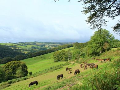 Dulverton Little Meadow (62662)