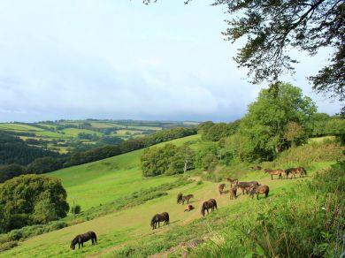 Little Meadow Too – Dulverton (73951)