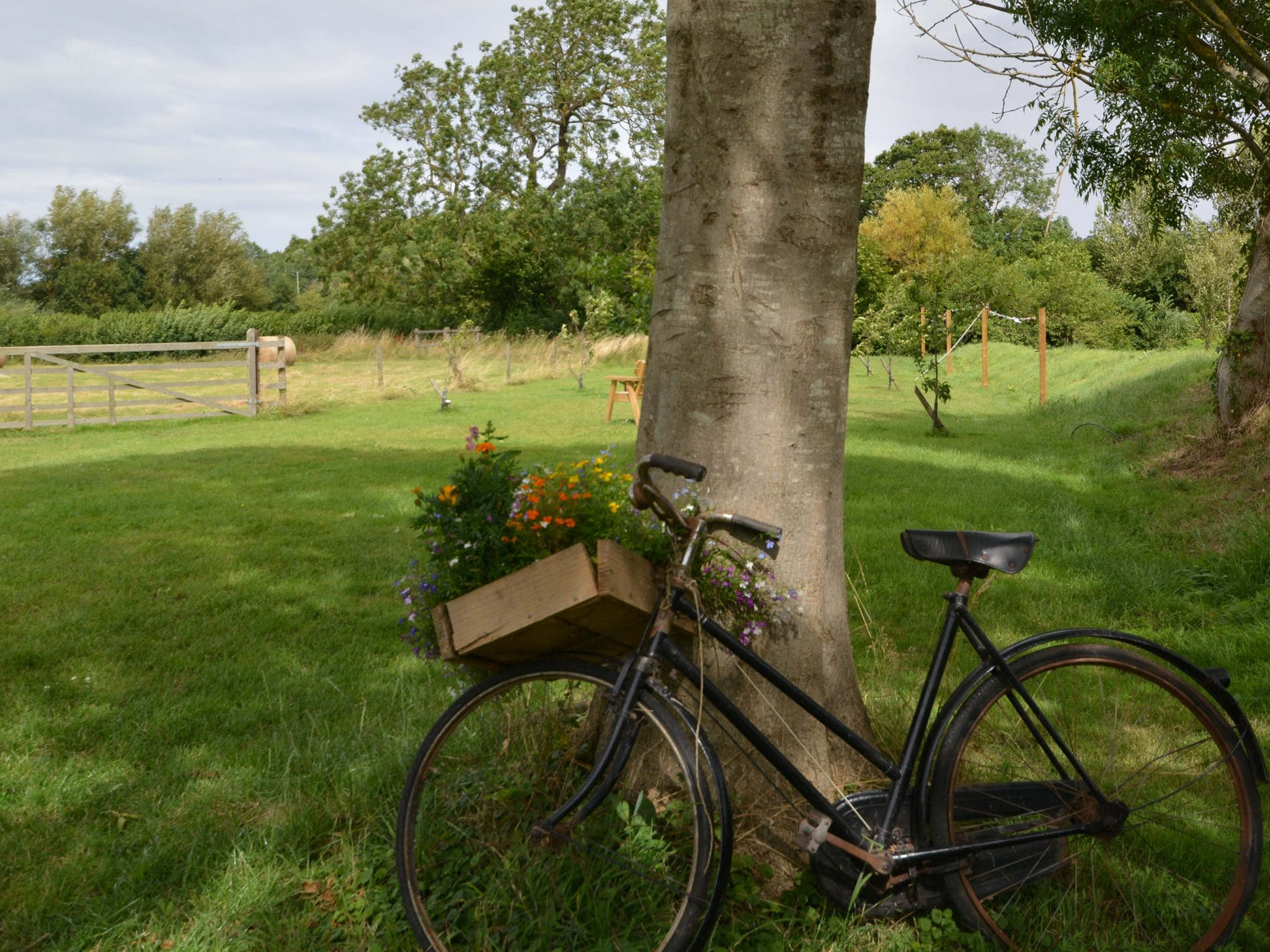 Explore the owners orchard and sit and enjoy