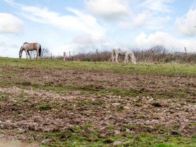 Stargazey Barn (76894)