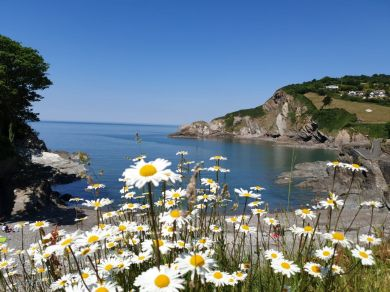 Beach Cottage - Combe Martin (78394)