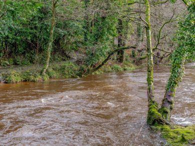 River Avon Pod (81102)