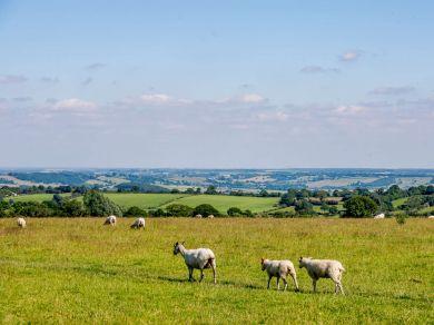Almscliffe View (83653)