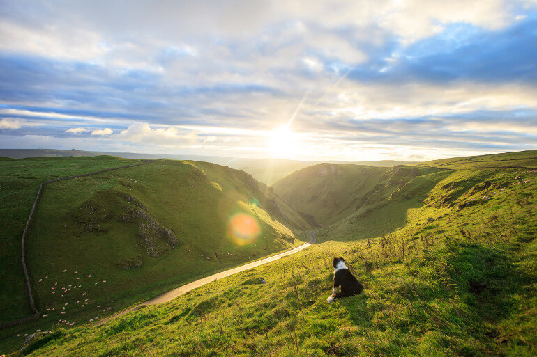Dog-friendly days out in the Peak District