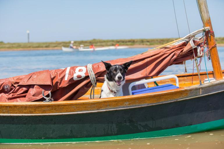Dog on a boat in the Norfolk Broads