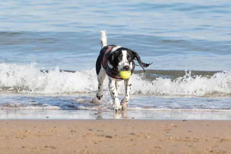 Dog-friendly beaches in Devon