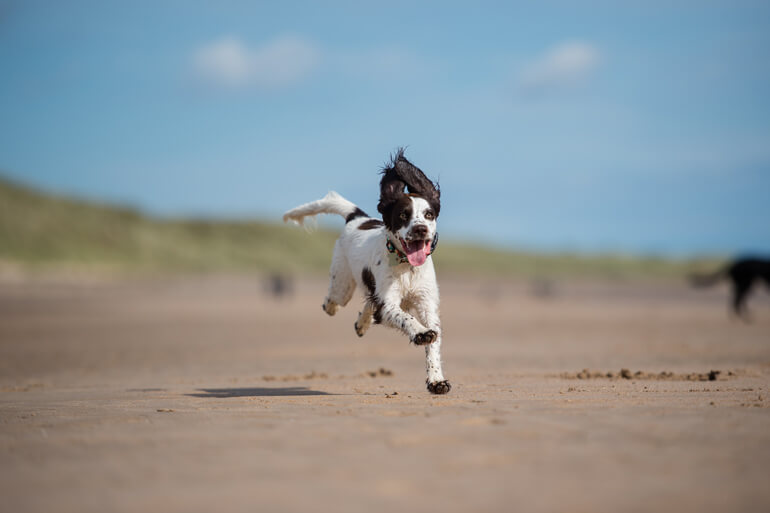 Dog-friendly beaches in Sussex
