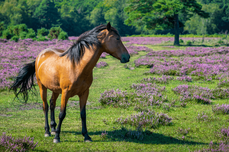 Wildlife to look out for in the New Forest National Park