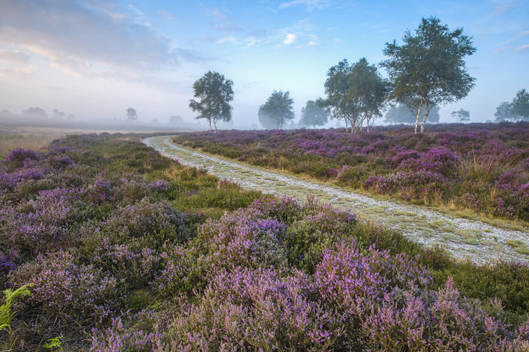10 stunning walks in Suffolk with a view