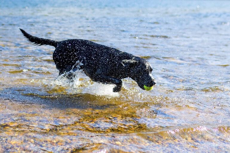 8 of the best dog-friendly beaches in Cumbria
