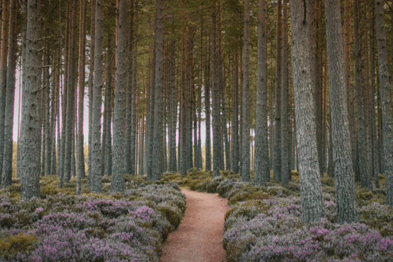 National parks: discover Britain's best landscapes