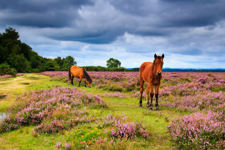 10 of the best places to stay in the New Forest