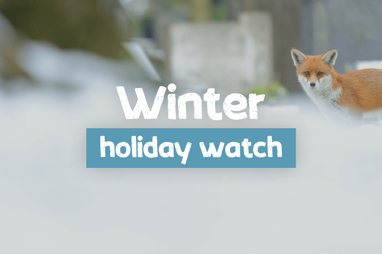 Introducing Winter Holiday Watch