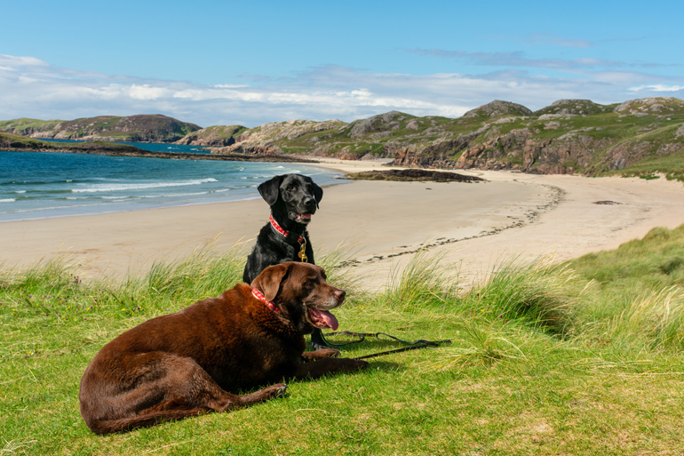 Dog-friendly beaches in Scotland