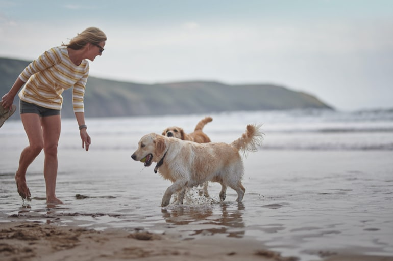 Guide to the UK's best dog-friendly beaches