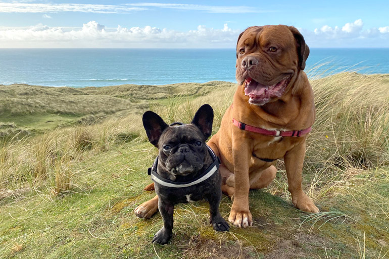 Discover dog-friendly Cornwall