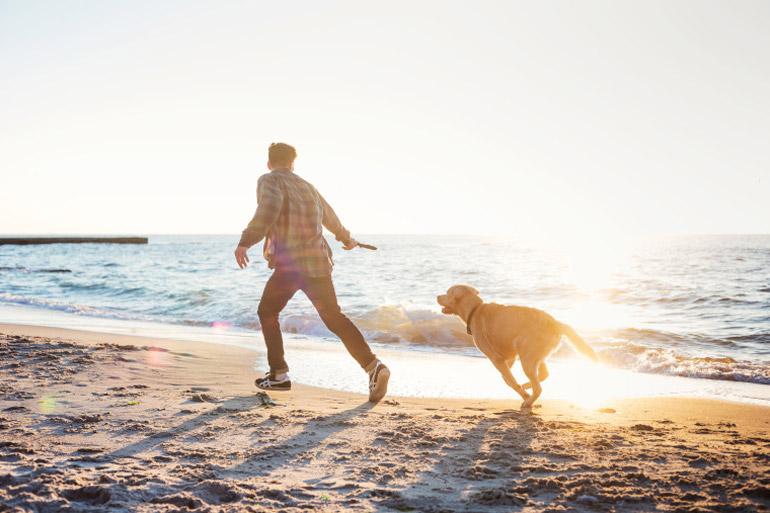Dog-friendly beaches in Cornwall