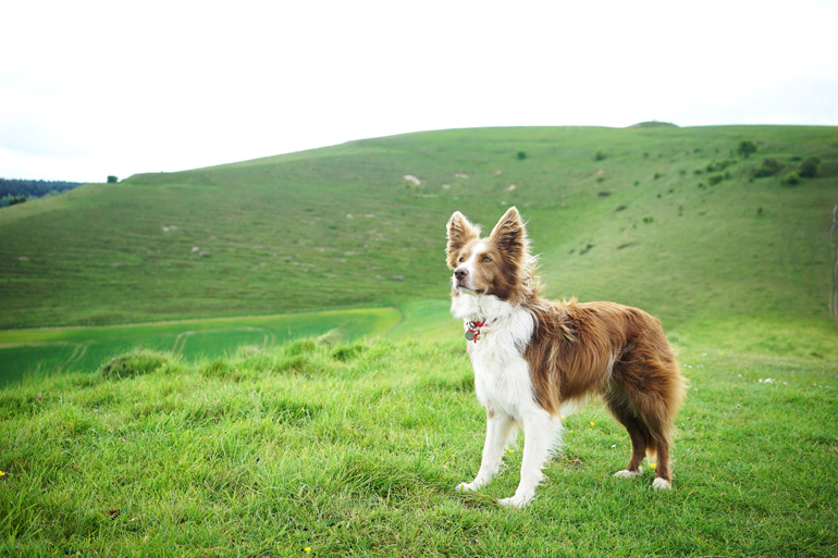 Discover dog-friendly Somerset