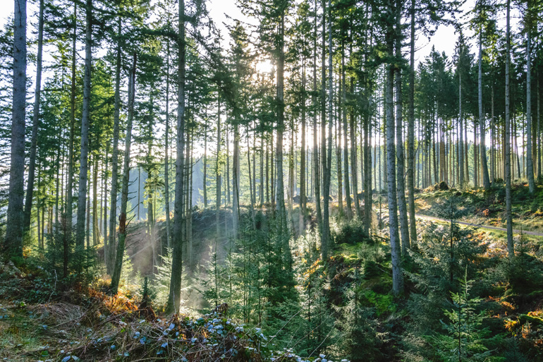 Northumberland's Kielder Forest: The quietest place in the UK