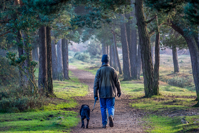 Explore the New Forest National Park with these 7 wonderful walks
