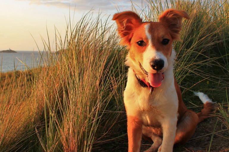 Dog-friendly Cornwall