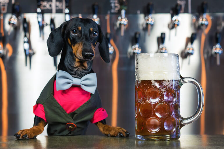 Dog-friendly pubs in the Lake District