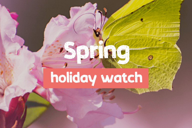 Introducing Spring Holiday Watch
