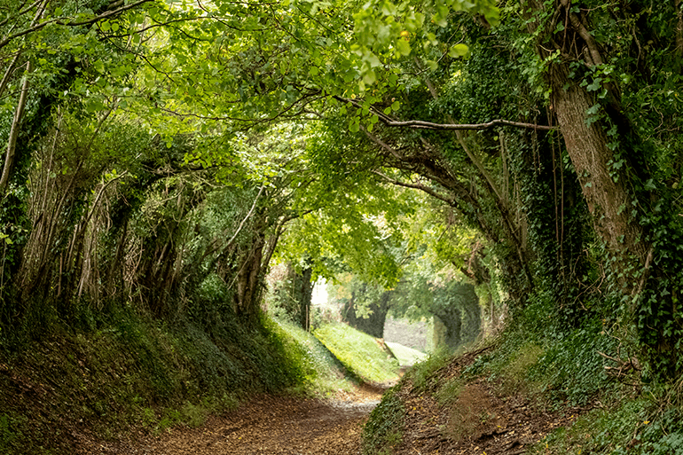 The best summer forest and woodland walks