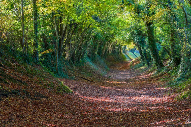 Uncover the best secret places to visit in Sussex