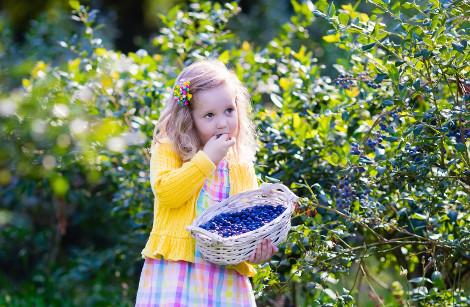 Children's countryside treasure hunt
