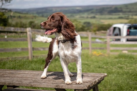 Dog-friendly pubs across the UK