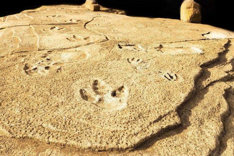 Dinosaur footprints at Compton Bay