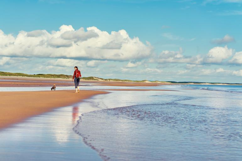 Best dog-friendly beaches in Northumberland