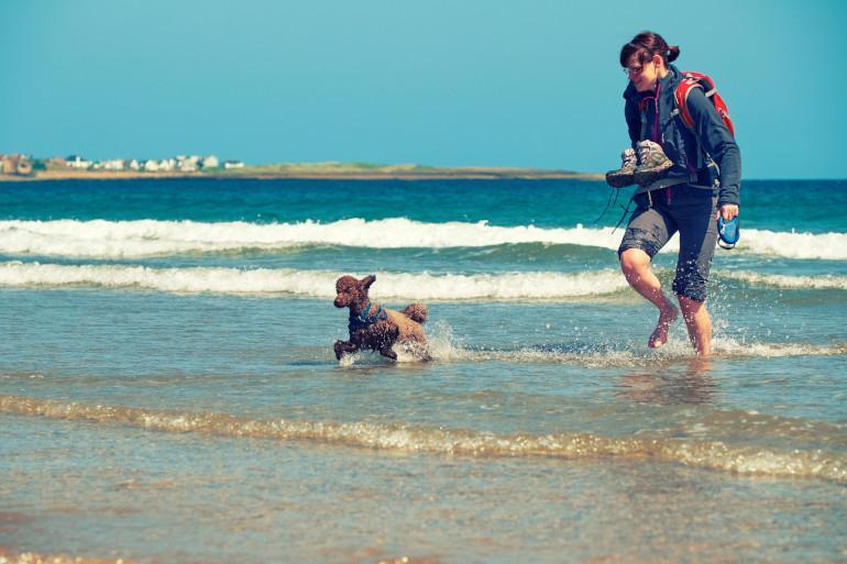 Embleton Bay - Dog friendly beaches in Northumberland