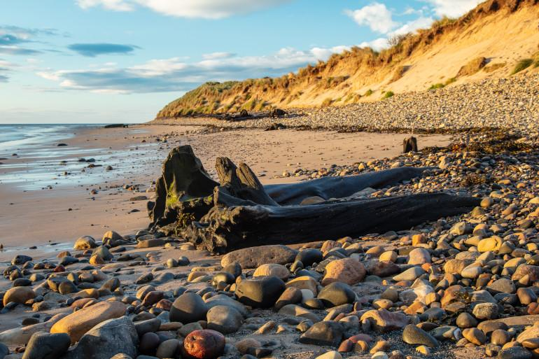 Amble Links - Dog friendly beaches in Northumberland