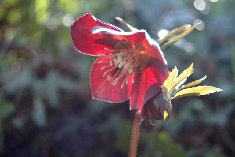 Aberdeen Botanic Garden