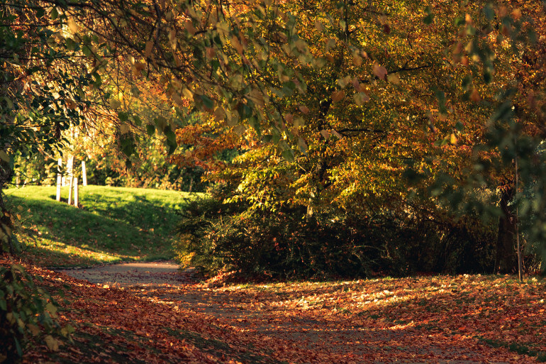 Hazelhead Park