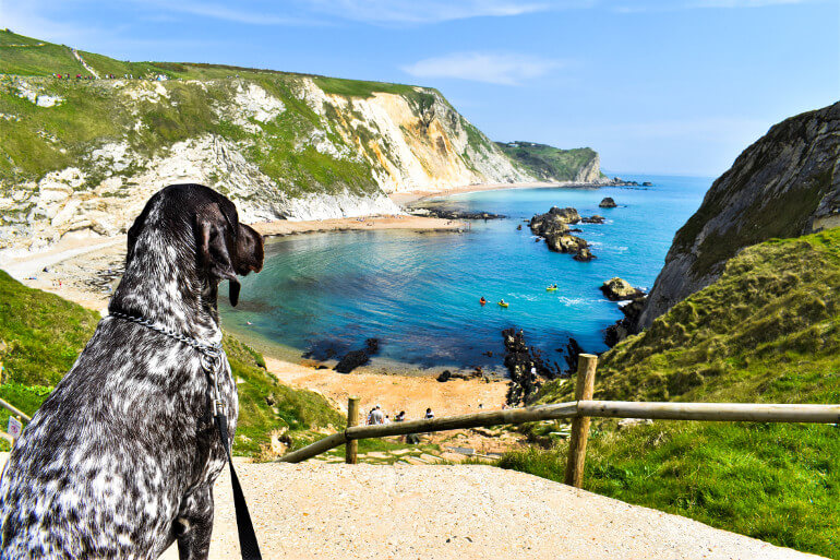 Dog-friendly beaches in Dorset